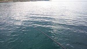 2021年エギングで釣れたアオリイカの画像